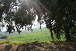 The green hillside of the Mount of Beatitudes