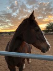 Official retreat horse, Bubba